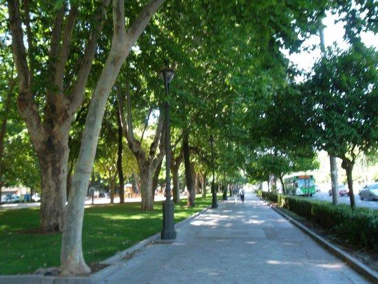 Historic Centre of Cordoba: Viale alberato