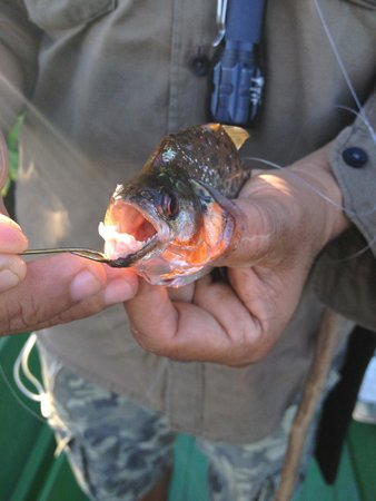 Amazon Turtle Lodge : Fishing for Piranhas with our guides
