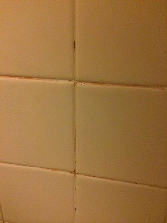 Hyatt Regency Miami : Tons of mold and mildew on shower tile