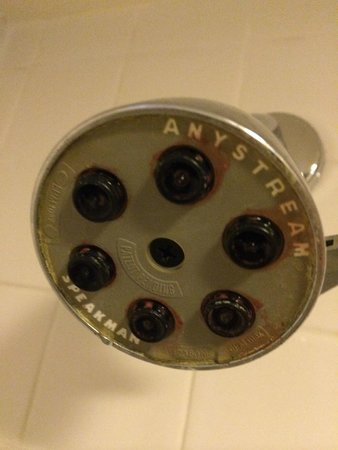 Hyatt Regency Miami : Mildew on showerhead - yuck!