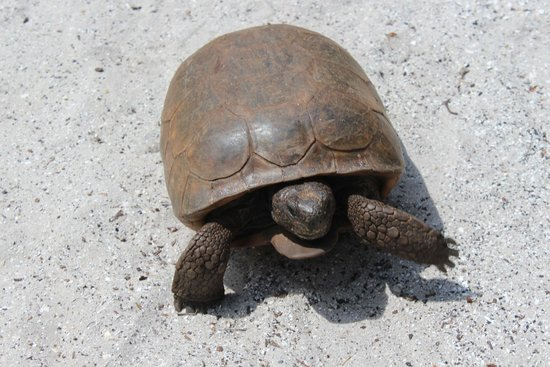 Coastline Dolphin & Snorkeling Excursions: Fort Dade's Tortoises