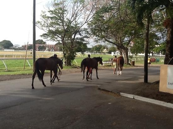 Hilton Barbados Resort: Returning from morning swim, near the racetrack.