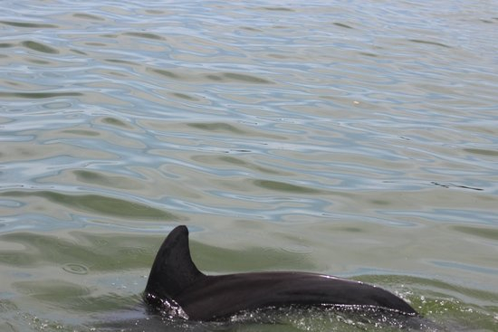 Coastline Dolphin & Snorkeling Excursions: Dolphin right next to boat