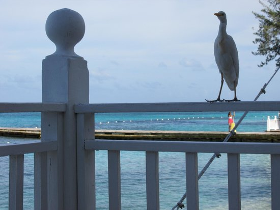 Royal Decameron Montego Beach : Hanging out with Miss Birdie