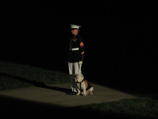 U.S. Marines Sunset Parade : Chesty, the Marine Corps mascot