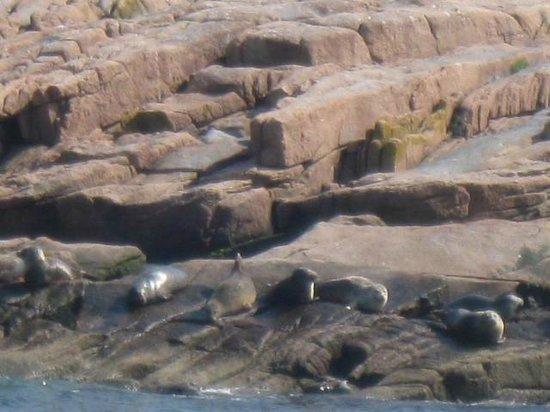 Island Cruises : Seals basking in the sun.