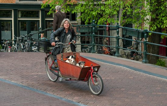Rotlichtviertel Walletjes: Lady with her dogs on a morning ride