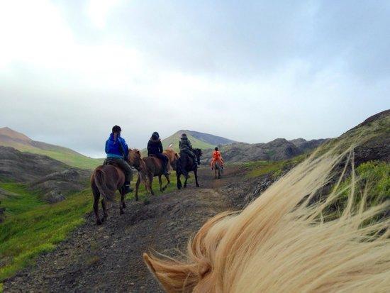 Laxnes Horse Farm: Laxnes Horse Ride