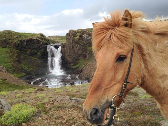 Laxnes Horse Farm: My Horse