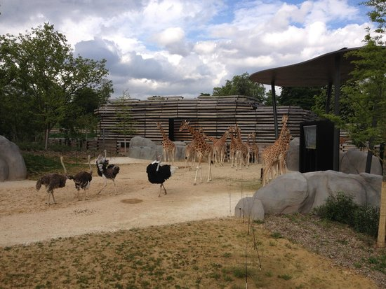 Parc zoologique ile de france for Parc animaux yvelines