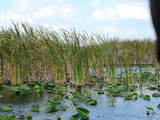 Everglades Holiday Park : glades