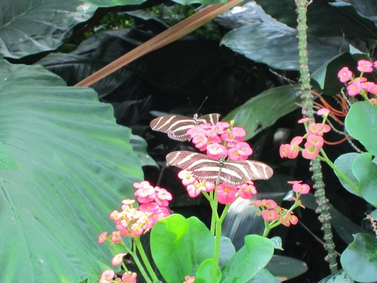 Niagara Parks Butterfly Conservatory: A couple of the many butterflys