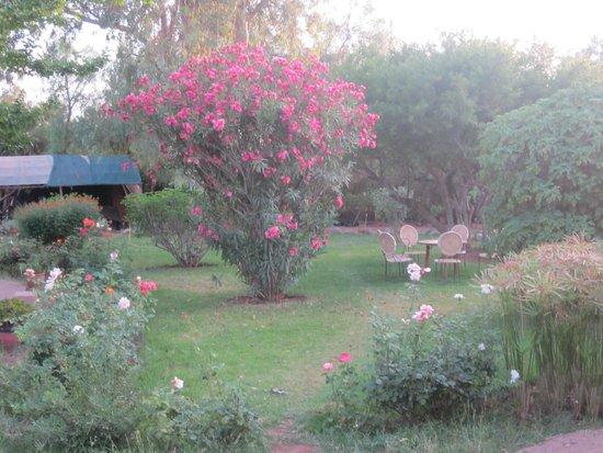 La Ferme Berbère: pour se faire une idée du jardin