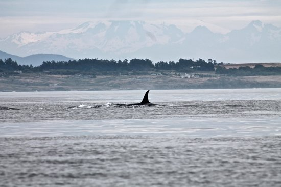 SpringTide Whale Watching & Charters: beautiful!
