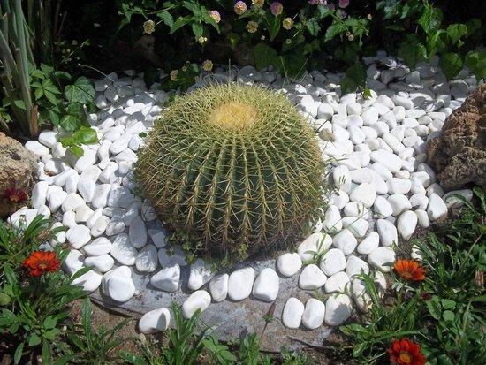 Hotel Riu Kaya Belek: jardin