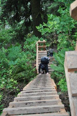 West Coast Trail: Lots of ladders!