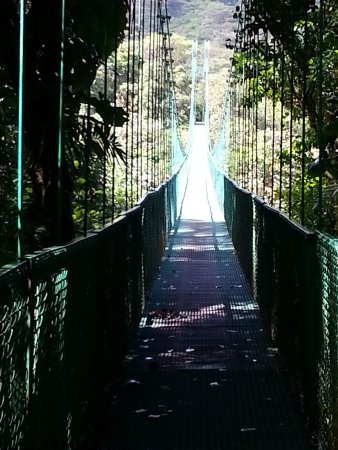 Selvatura Park: Bridge
