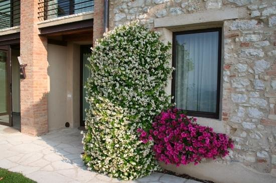 Relais Dolcevista Agriturismo: Lovely Scent of Jasmine Everywhere