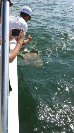 Reel Action Fishing Charters: daugther's sting ray