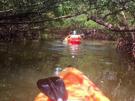 Liquid Blue Outfitters : Entering the mangroves