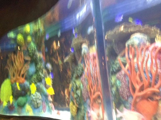 Rainforest Cafe : Fish tank by our table