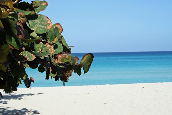 Casa Marta Margarita: The beach - turquoise water and golden sand