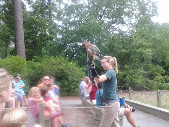 Callaway Gardens: birds of prey show