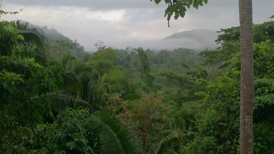Ian Anderson's Caves Branch Jungle Lodge : Breathtaking views from our treehouse!