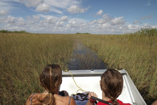 Airboat In Everglades : taking off