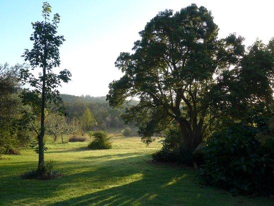 Wharepuke Subtropical Accommodation: Autumn morning