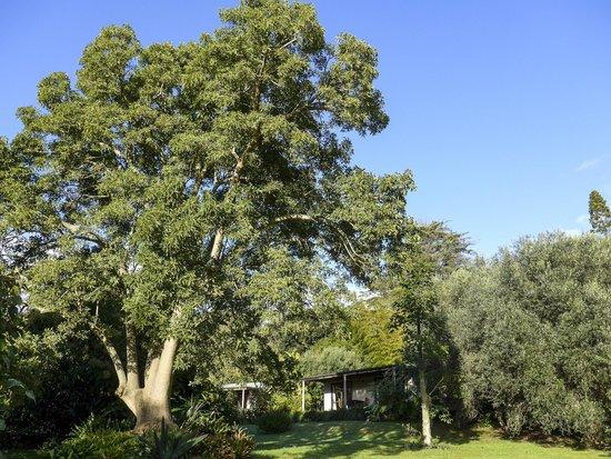 Wharepuke Subtropical Accommodation: 5 acres of award winning garden