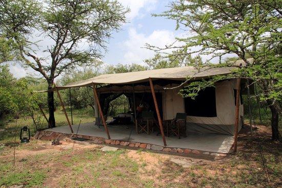 Leleshwa Camp : My tent