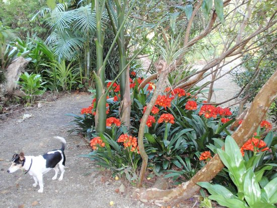 Wharepuke Subtropical Accommodation: Kerikeri - Wharepuke Subtropical Gardens