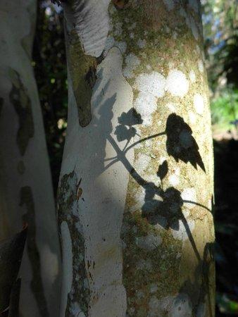Wharepuke Subtropical Accommodation: Wharepuke Subtropical gardens Kerikeri