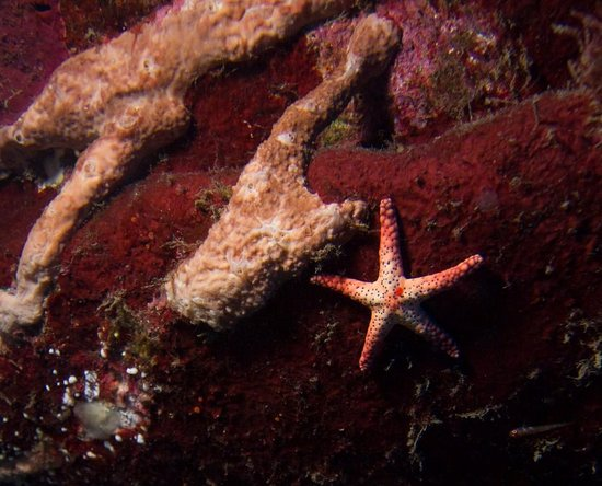 Kosrae Village Ecolodge & Dive Resort: Tropical Sea Star