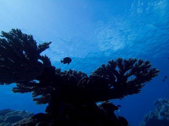 Kosrae Village Ecolodge & Dive Resort: Silhouettes