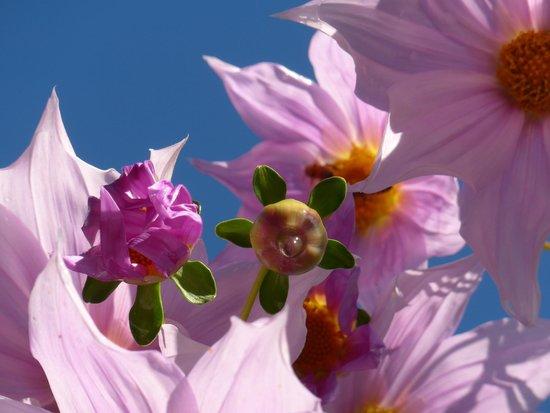 Wharepuke Subtropical Accommodation: Flowers at Wharepuke in Kerikeri NZ