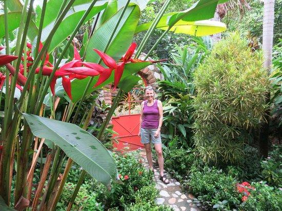 Casa de Piedra : Foliage by entrance.