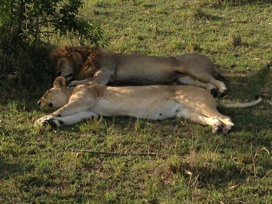 Olare Mara Kempinski Masai Mara: Lions