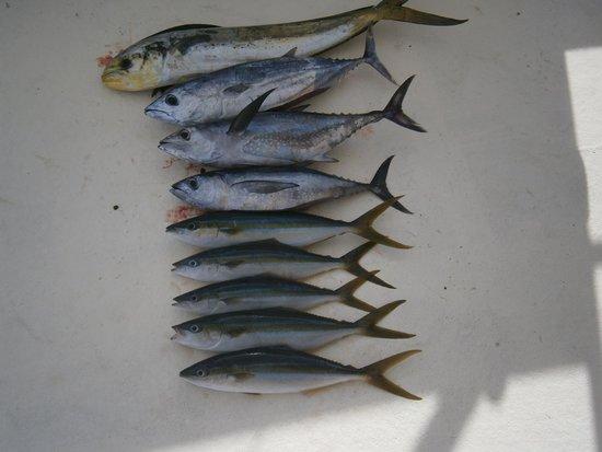 Phuket Fishing Charters: Not the whole catch