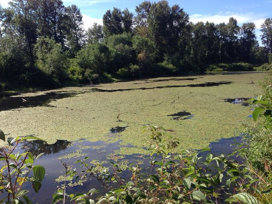 Willamette River bike trail: The Delta Ponds