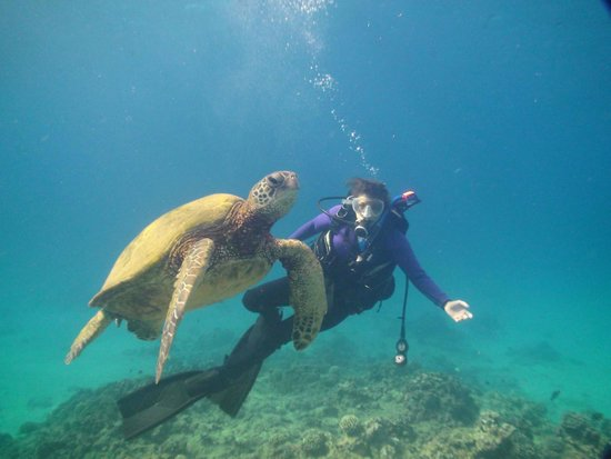 Hawaii Eco Divers & Surf Adventures: At a turtle cleaning station