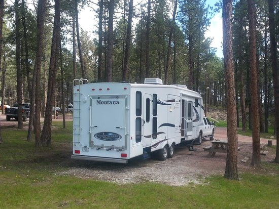 Big Pine Campground: Huge Pines surrounded us!