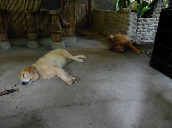 Rancho Margot : Some of the wonderful dogs at the Rancho