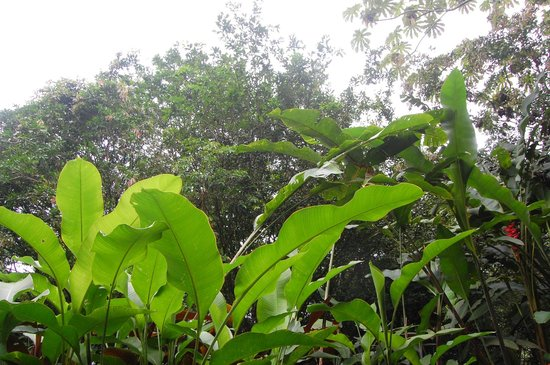 Arenal Natura Ecological Park: Eliconias