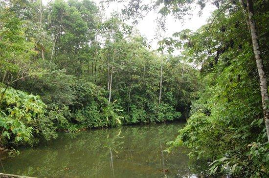 Arenal Natura Ecological Park: Croco-lake