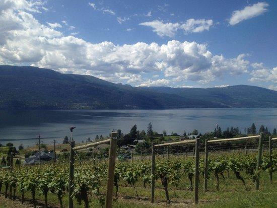 Gray Monk Estate Winery : Vineyard overlooking Lake Okanagan