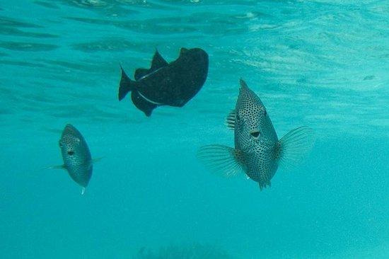 Kurumba Maldives: Hello