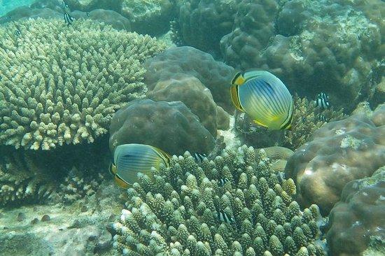 Kurumba Maldives: a couple