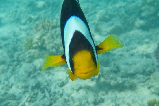 Kurumba Maldives : Nemo